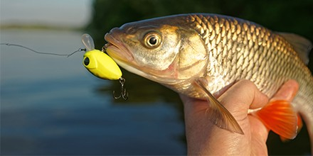 Fishing with Soft Plastic Baits